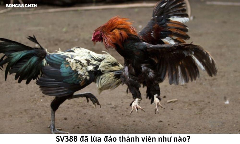 SV388 đã lừa đảo thành viên như nào?